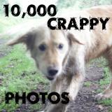10,000 crappy photos