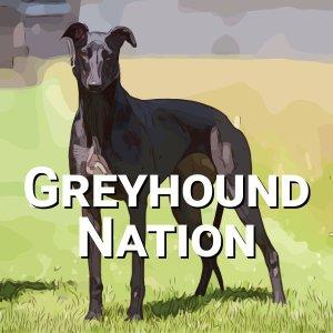 Greyhound Nation