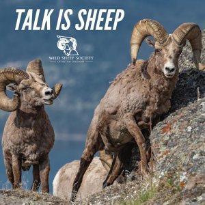 Talk Is Sheep