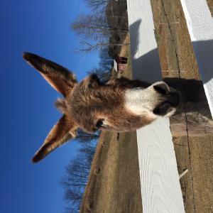 DonkeyTells Podcast providing Information & Inspiration